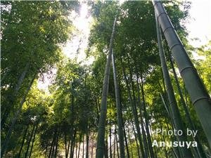 The Bamboo Forests of Anji