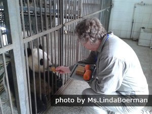 Working as a volunteer to take care of  Giant Pandas