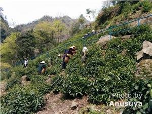 The Beautiful Hills of Moganshan — Hangzhou Expat Retreat