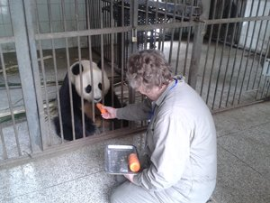 Dujiangyan Panda Valley for the Panda Keeper Program