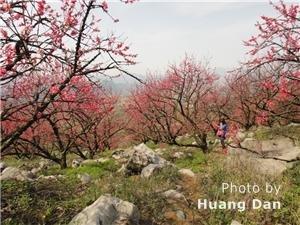 Gongcheng Peach Blossom Festival