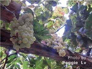 Grape Valley, Turpan