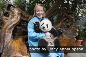 You can take a picture with a cute giant panda at Dujiangyan Panda Base.