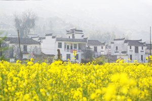 Wuyuan in spring