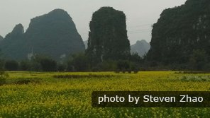 Oilseed fields in Yangshuo in spring