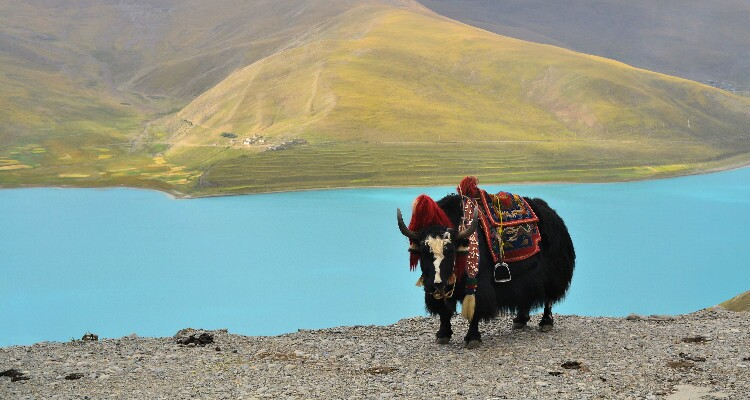 lake namtso in tibet
