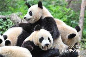 Beijing Zoo — China's Biggest Zoo with Pandas
