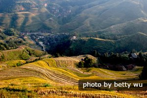 Harvest time at Longsheng