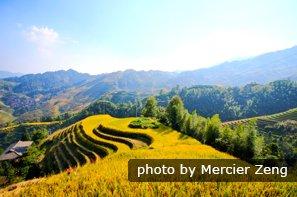 Les champs en terrasses de Longji