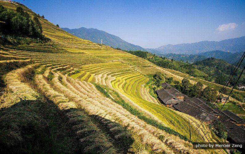 longji rice trerraces