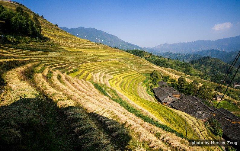 longji rice trerraces