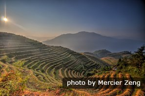 Longji Terraced Rice Fields in Fall