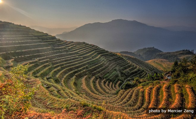 Longji Terraced Fields in Fall