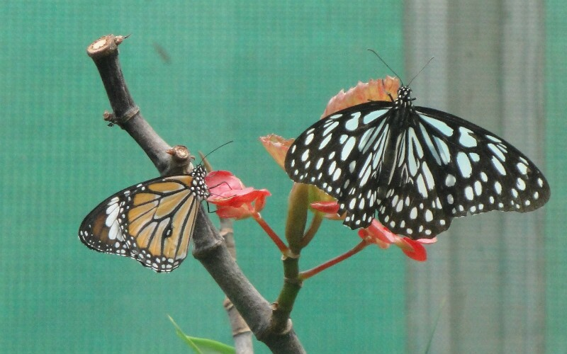 Shanghai Natural Wild Insect Kingdom