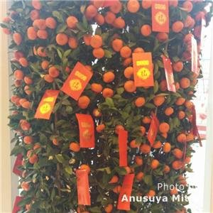 Top Lucky Chinese New Year Flowers and Fruits