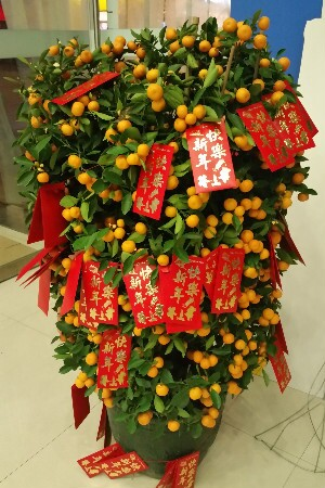 Chinese new year decoration tree