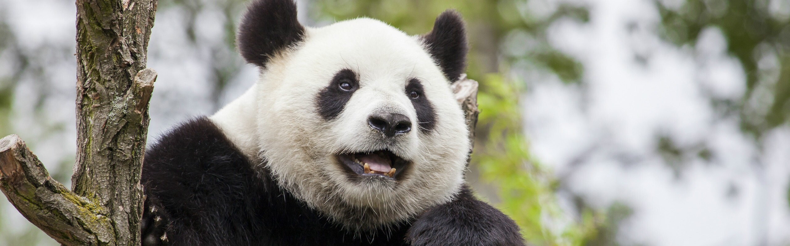 12 Days Panda Keeper and Classic Wonders