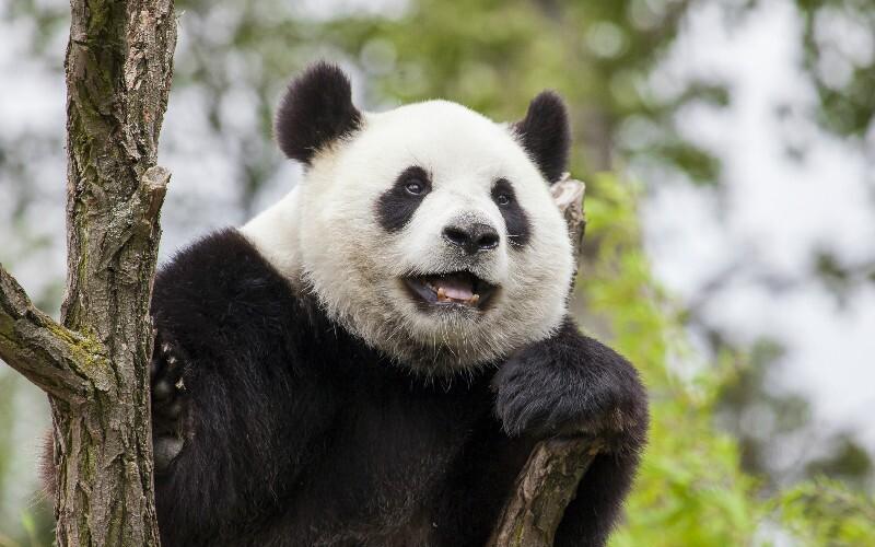 How to Plan a Panda Tour