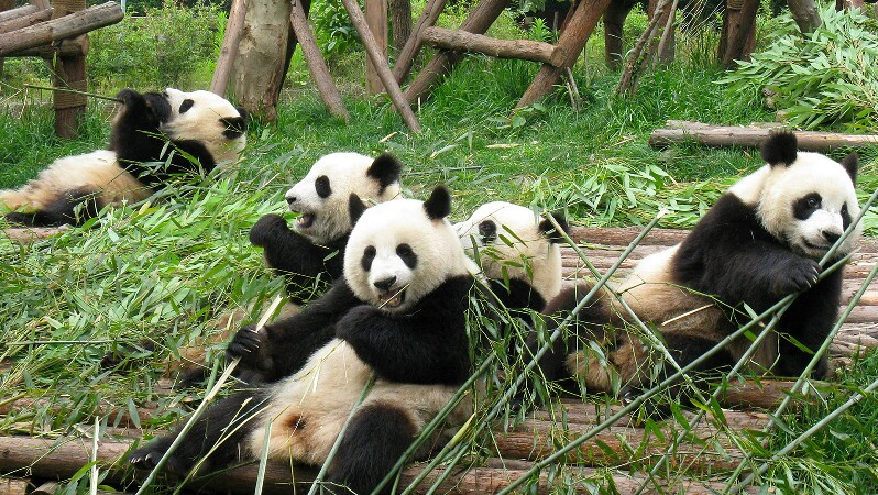 the best places to visit in June in China: chengdu
