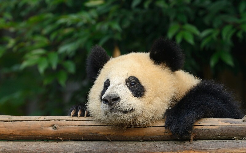 7 Great Endangered Attractions in China