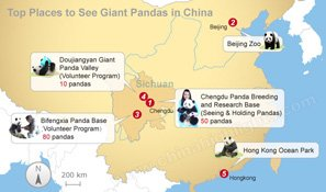 5 Top Places to See Giant Pandas