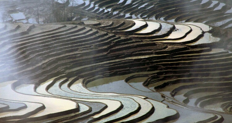 the terraced fields with water