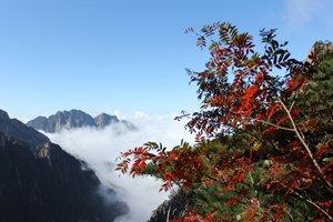 Les couleurs d'automne des montagnes jaunes
