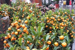 Chinese New Year fruits