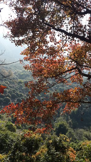 shimen national forest park