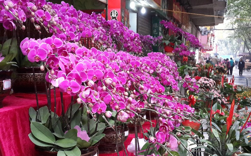 Hong Kong and Macau Chinese New Year's Eve 2020 Flower Markets