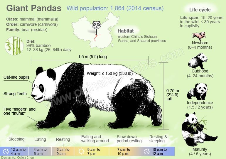 Giant Pandas, All things you want to know about Giant Pandas of China