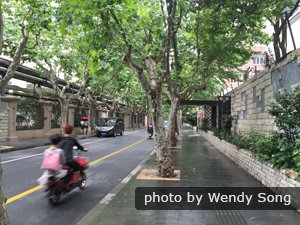 A tree-lined avenue at the French Concession
