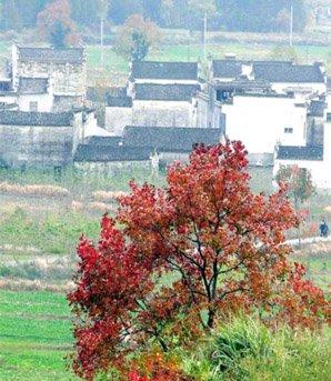 Le village de Tachuan
