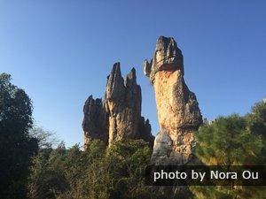 La forêt des pierres