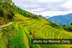 The Longji Terraced Fields