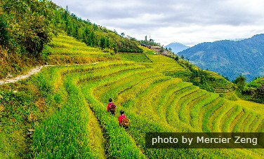 Enjoy Ethnic Rice Terraces