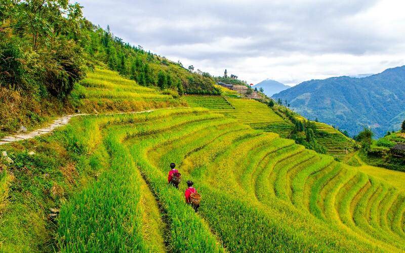 Longji Terraced Fields Hiking