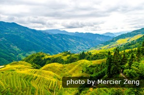 The Longji Rice Terraces in fall