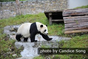 Wolong Panda Research Center
