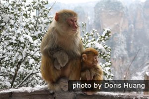 Zhangjiajie in winter