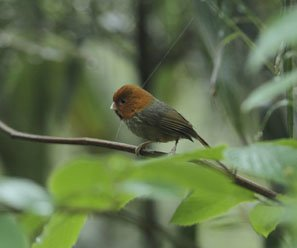 One Day Birding Tour in Guilin