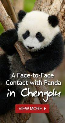 panda tour