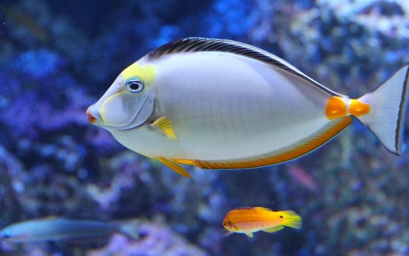 Beijing Aquarium - Ocean and Amazon Wildlife, HUGE!