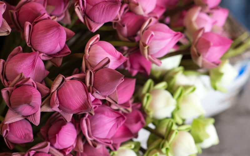 Guangzhou Lotus Flower Festival