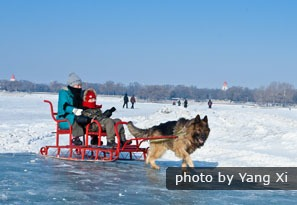 dog and sledge on ice, Harbin, China