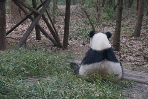 6 Top Giant Panda Movies, Documentaries, and Publications