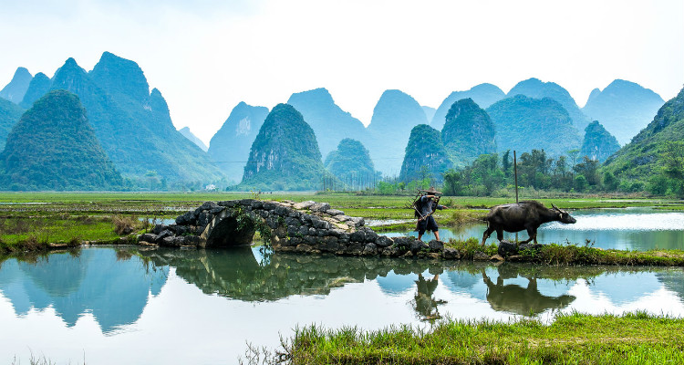 Local Farmer with his Water Buffalo, Guilin