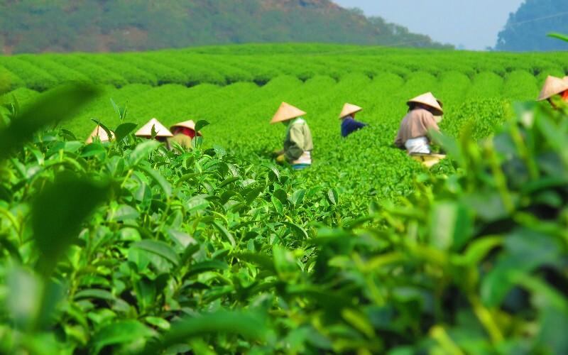 China's Top Tea Culture Cities