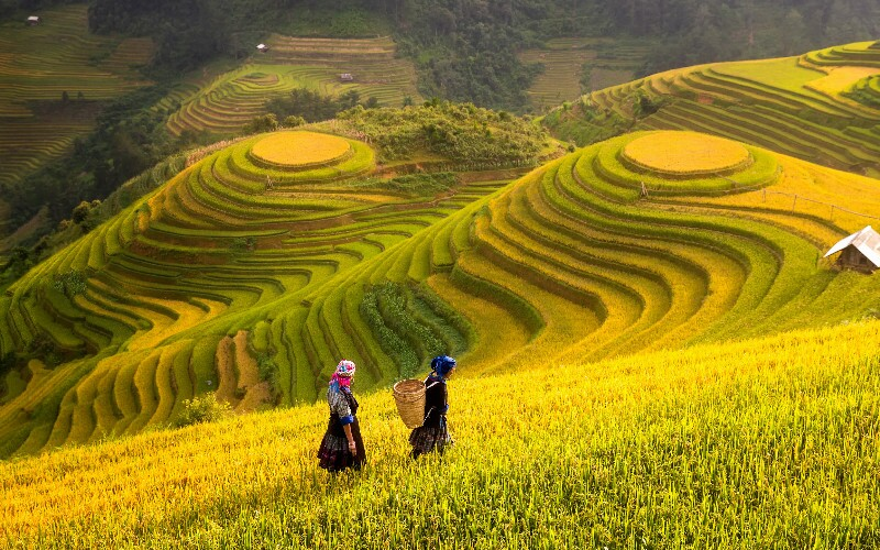 China's 5 Most Beautiful Rice Terraces