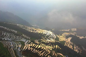 longji rice terraced field in may